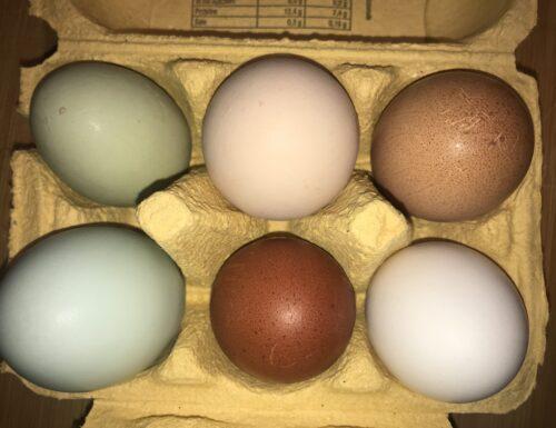 uova in frigorifero o no?