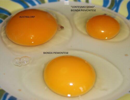 """""""centesimo uovo """""""