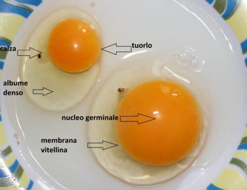composizione di un uovo